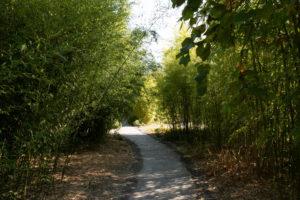 Allée de bambous, Jardin des Géants