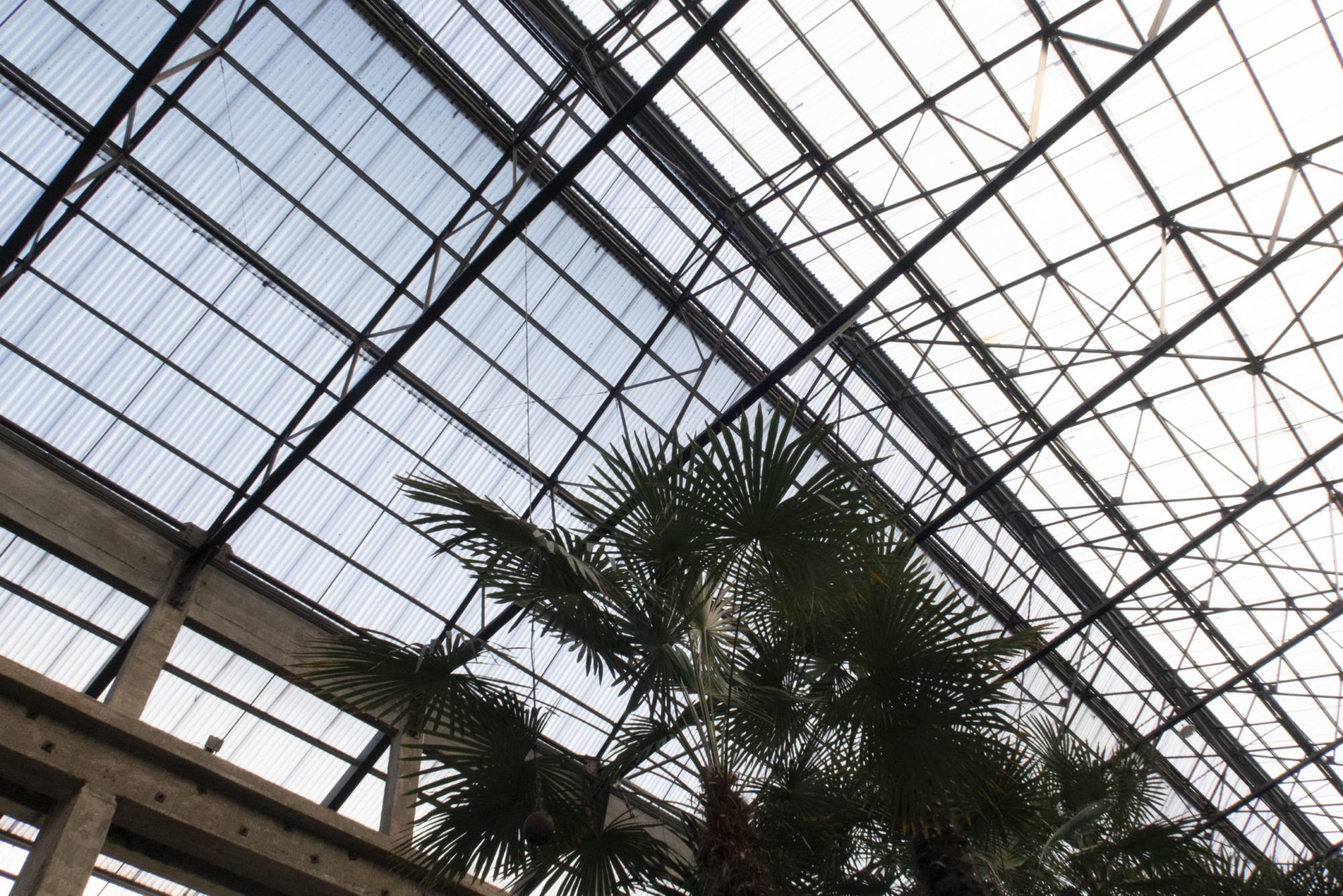 Palmiers dans le hangar des Machines de l'Île