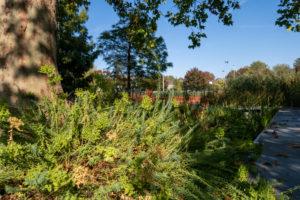 Jardin des Géants, au pied d'un arbre