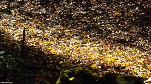 Le soleil réchauffe les feuilles