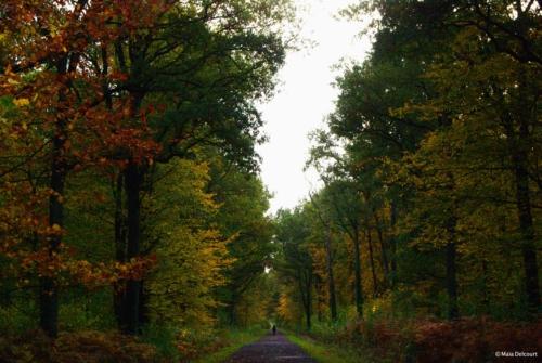 Forêt de Marchienne